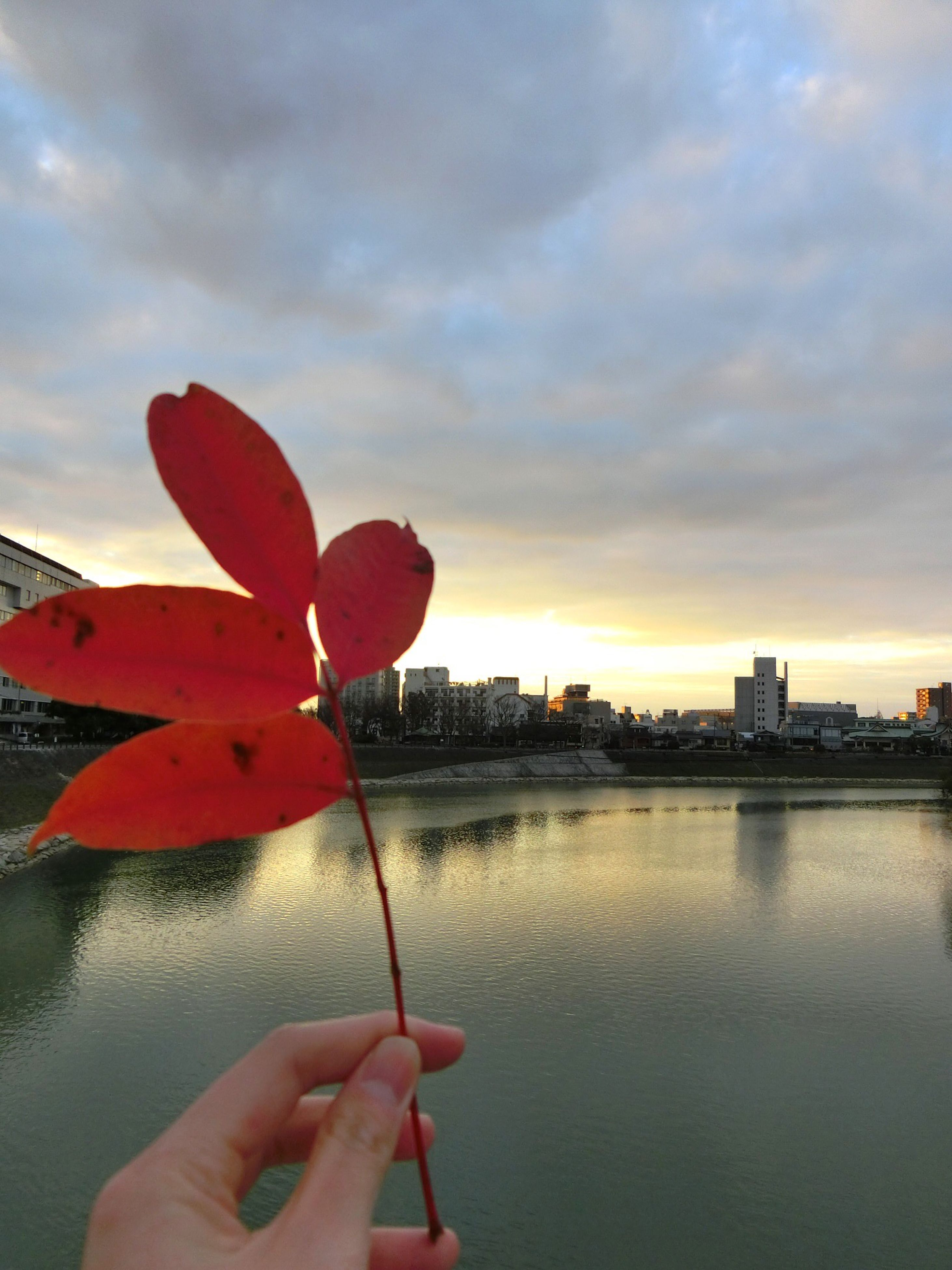 person, water, sky, holding, red, part of, cropped, cloud - sky, orange color, beauty in nature, nature, flower, freshness, cloud, focus on foreground, personal perspective, human finger