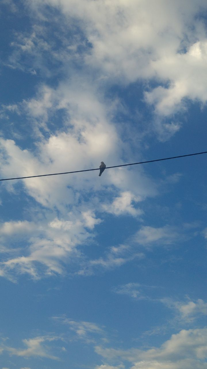 low angle view, sky, cloud - sky, cable, day, no people, outdoors, nature, animals in the wild, vapor trail, bird, contrail, animal themes, beauty in nature
