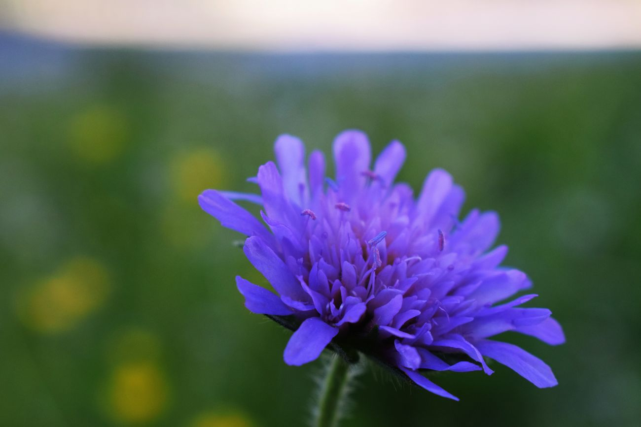Beauty In Nature Day Field Flower Flower Head Freshness Growth Nature No People Outdoors Purple Pollination One Animal Landing Bee Insect Flying Bee Animals In The Wild Animal Themes Leaf Green Color Green Flowers Blue Flowers Green Leaves Blue Flowers Winter