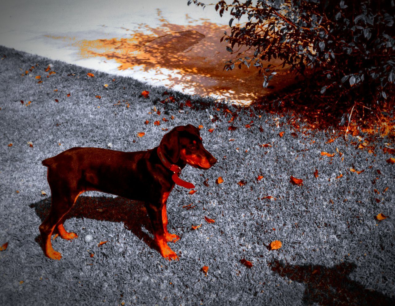 Dog Life In Motion No People Doberman  Pets Corner Creative Light And Shadow Puppies Summer Dogs Carmine Service Animals Adventure Buddies Cute Animals Cute Animal Photography Animal Themes Animals