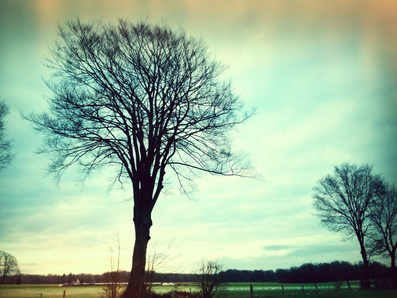 Zwei Bäume ohne Blätter stehen in trübem Licht auf einer Wiese Baum Bearbeitet Bäume Einsamkeit Feld Herbst Herbststimmung Himmel Kahl Kahle Bäume Landschaft Melancholie Natur Nature Nature Photography Ohne Blätter Ruhe Und Stille Stillleben Trübnis Trübsal Verfremdet Verfremdung Wiese  Wolken