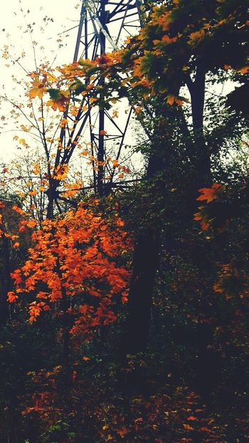 Tree Autumn Nature Beauty In Nature Outdoors Tranquility Tree Trunk Change Forest Growth Scenics Tranquil Scene Sky Leaf No People Landscape Branch Day Tree Area Autumn Growth Tranquility Daylight Journey Travel