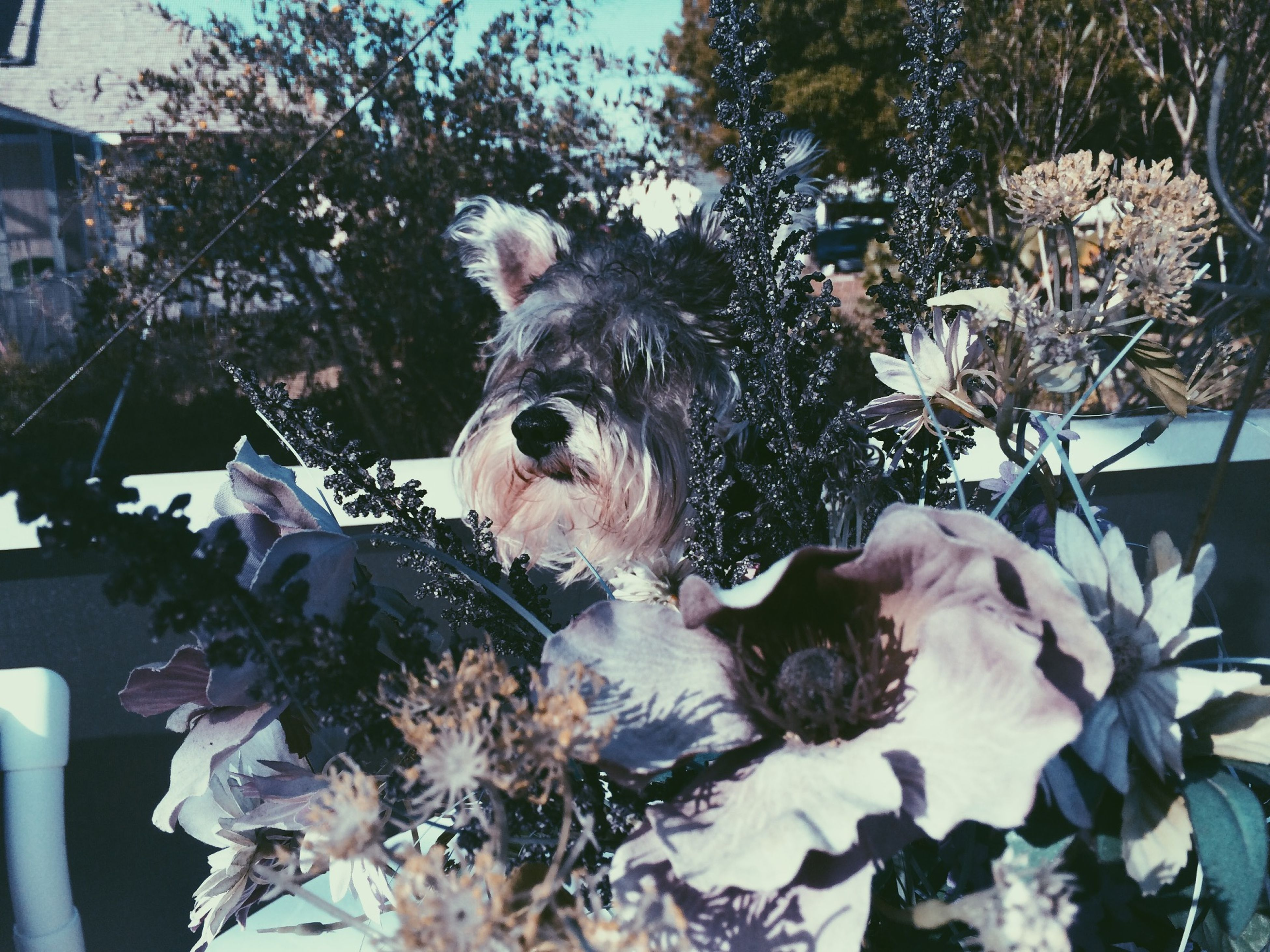 flower, domestic animals, animal themes, pets, one animal, dog, plant, mammal, potted plant, front or back yard, white color, day, growth, tree, close-up, outdoors, sitting, nature, freshness, car