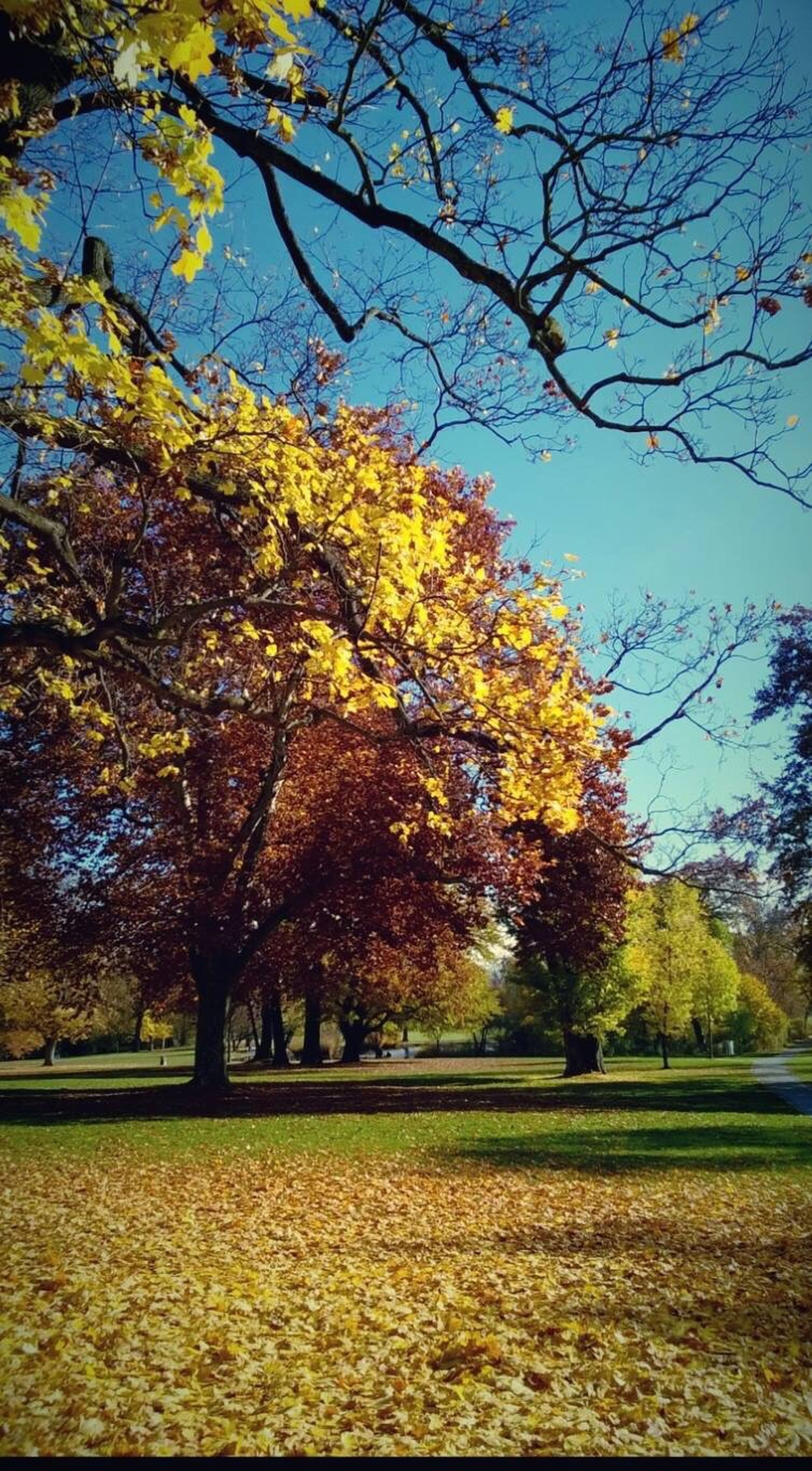tree, autumn, nature, growth, change, beauty in nature, sky, no people, leaf, outdoors, tranquility, scenics, day, branch, tranquil scene, freshness