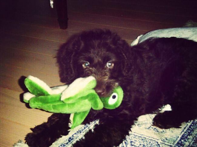 Love my dog Tuffy❤️