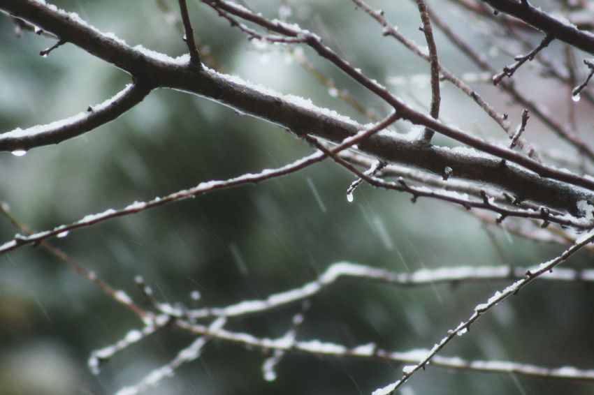 Winter Cold Temperature Snow Branch Tree Frost Close-up Nature Backgrounds No People Outdoors Day Beauty In Nature