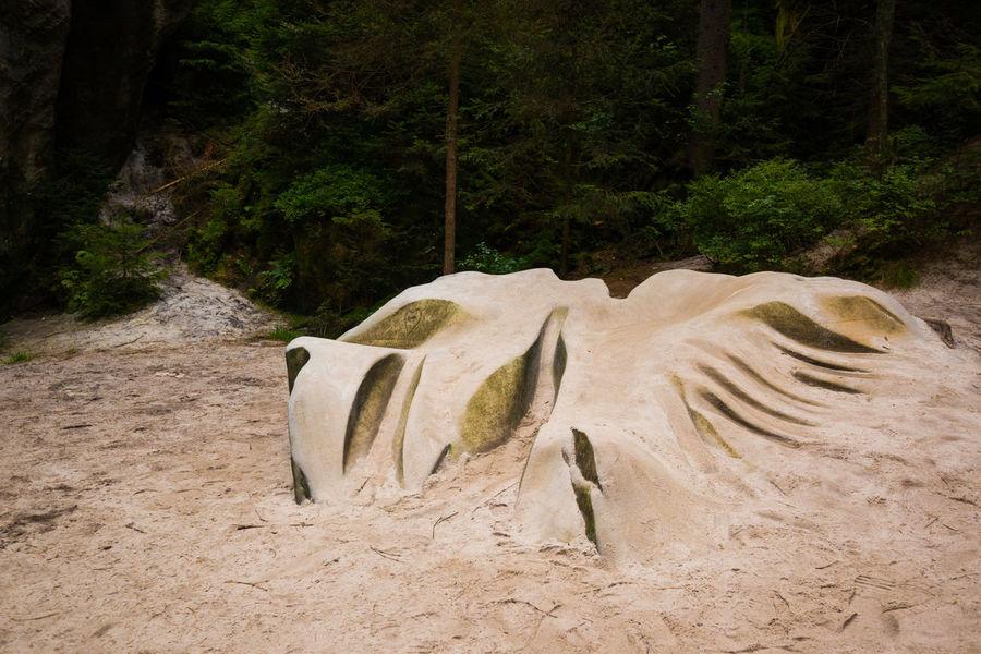 Adršpach Adršpachské Skály Day Growth Nature No People Outdoors Sand Stone Tree