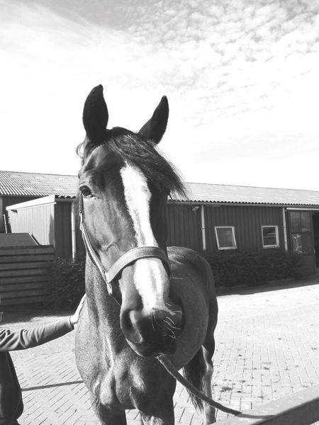 Mayka❤️ Mayka Besthorse Loveher Horse Horses Picbyme Pferde Pferd Paard Lovethepicture Ilovethishorse