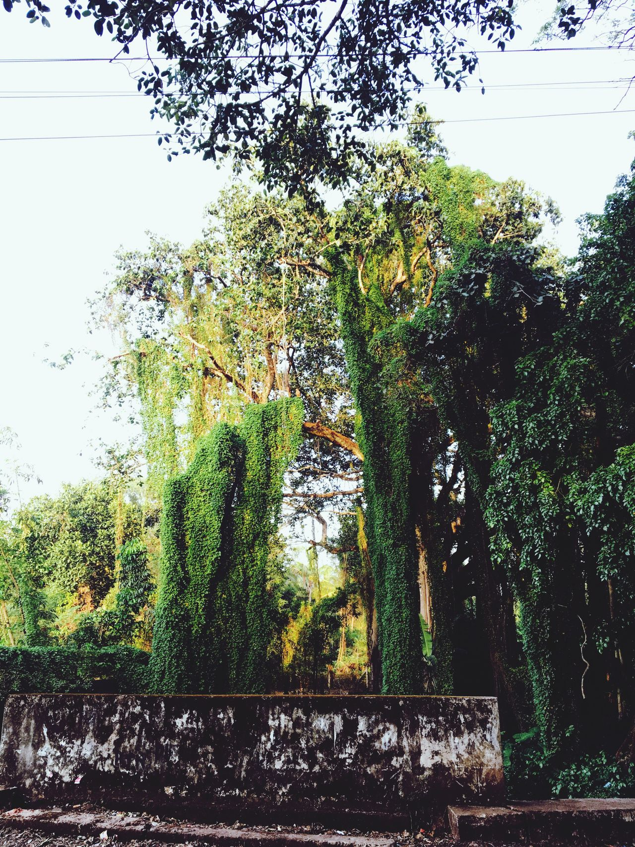 Tree Growth No People Day Nature Green Color Beauty In Nature Low Angle View Break The Mold Loveforphotography Art Is Everywhere Outdoors Beauty In Nature ❤️❤️