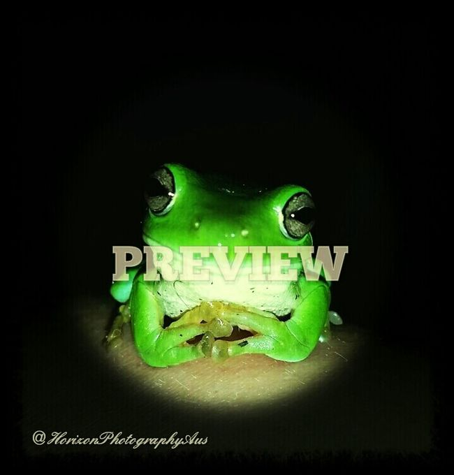 Cute little shot of this guy! Greenfrog Nature Beautiful Nature FUNNY ANIMALS