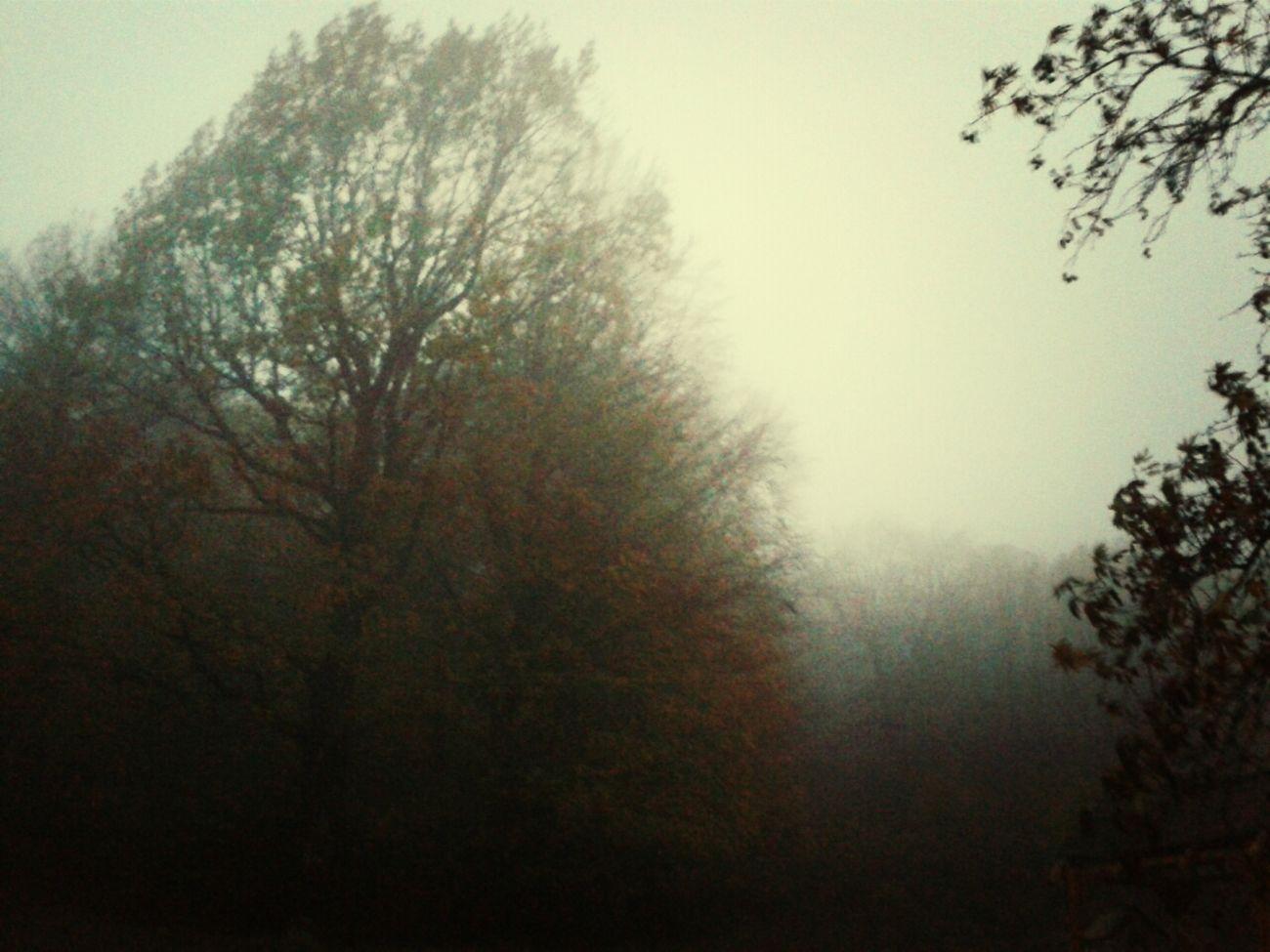 Autumn Mist Veria Greece
