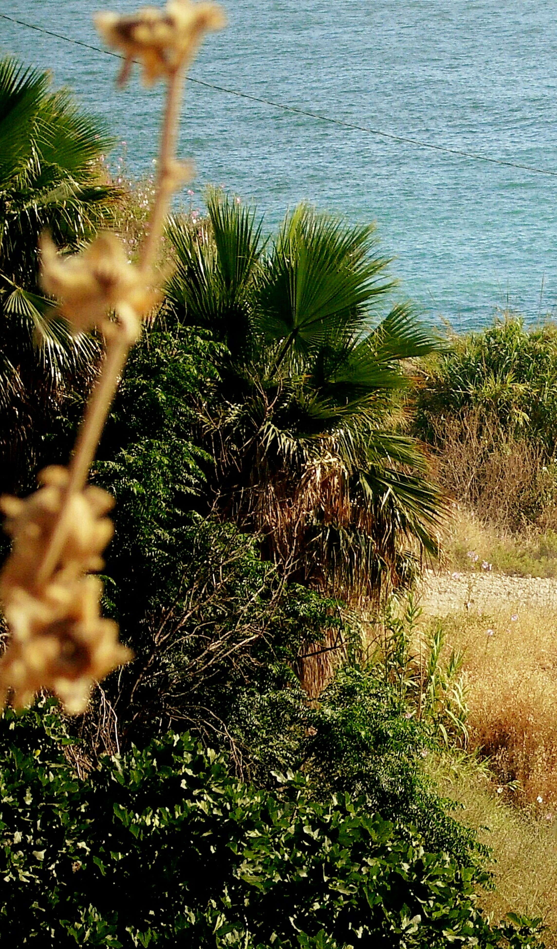 nature, water, growth, sea, day, outdoors, tranquility, plant, beauty in nature, green color, tranquil scene, no people, scenics, grass, beach, horizon over water, close-up, tree