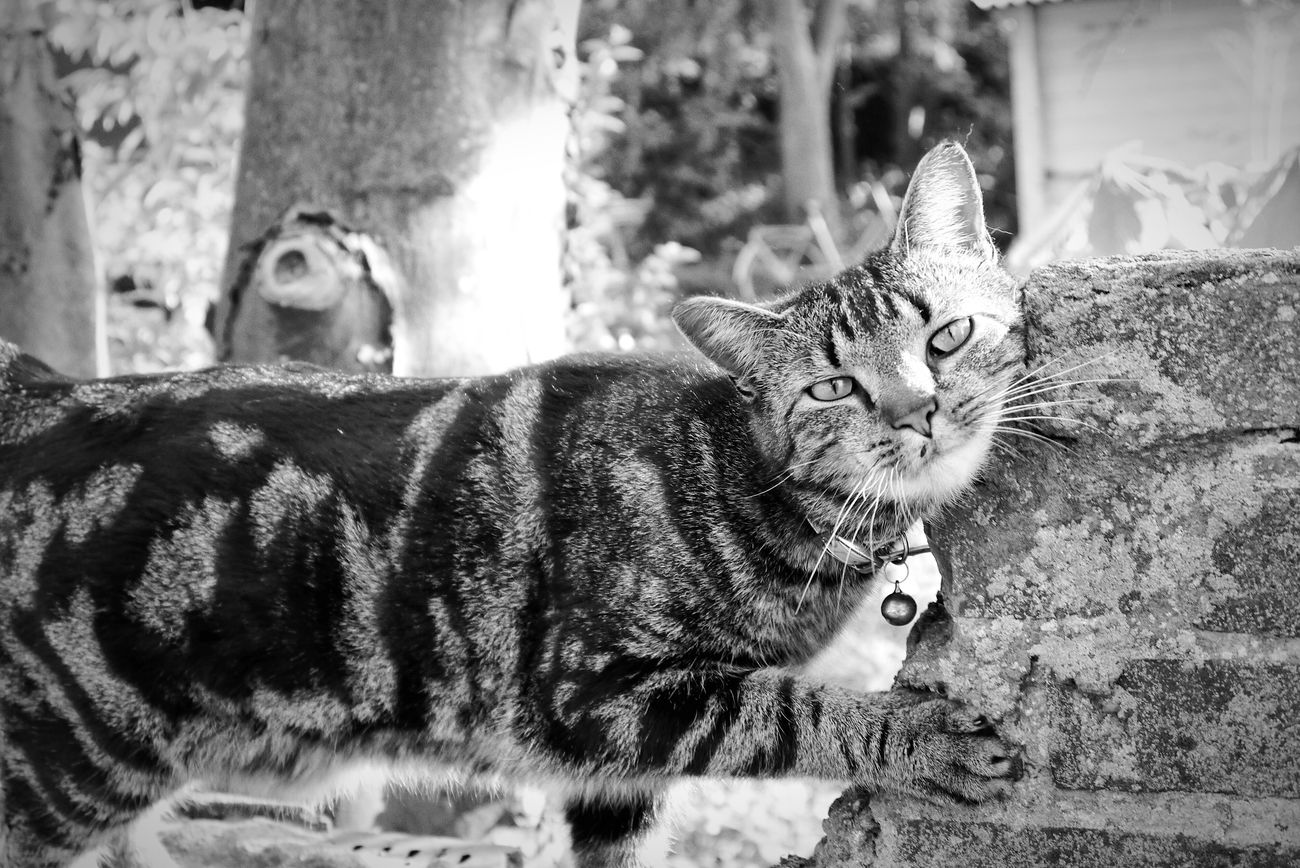Cat Lovers Catsofinstagram Blackandwhite Photography Edited Contrast Black And White