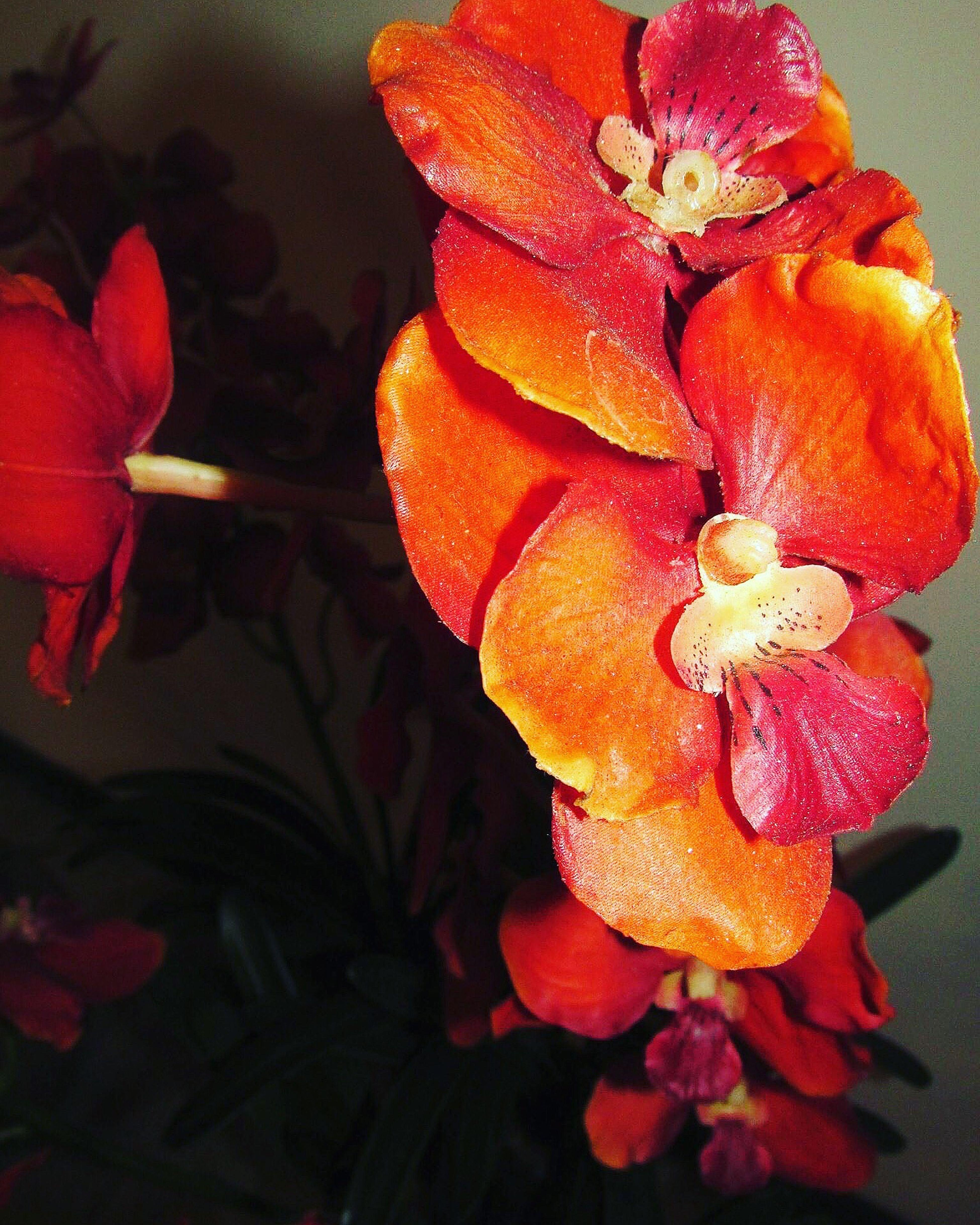 📸 #flores #flowers #natureza #orquideas #color #paisagismo #garden #photo #picture #photographer #iphone #fashionmall #shopping #saoconrado #riodejaneiro #brasil