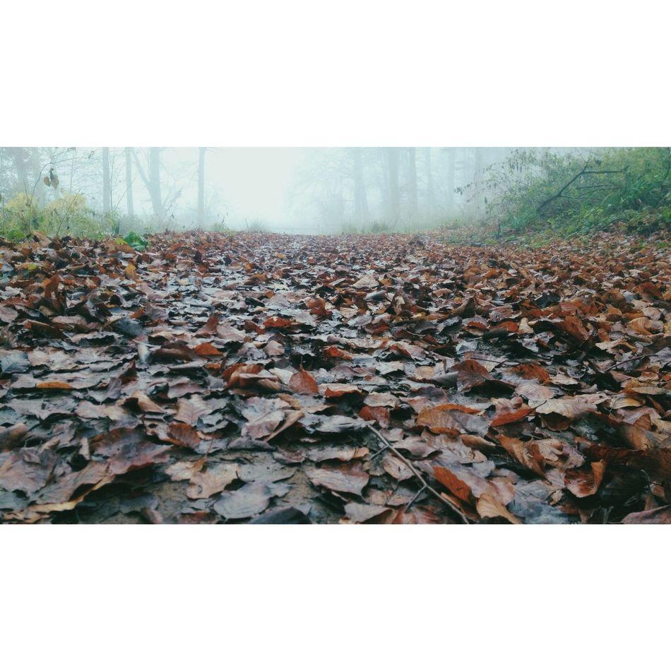 Trampled 16x9 Vscocam Fog Landscape