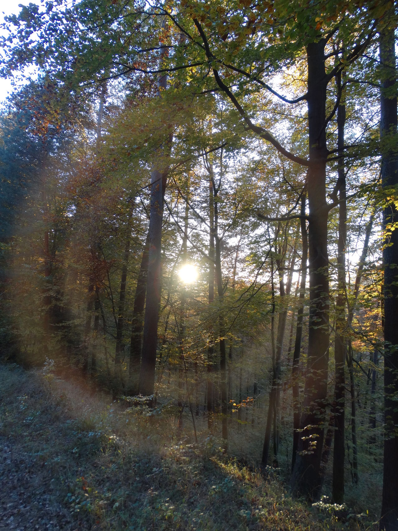 Pfälzerwald Nofilter Outdoors Sunlight Sun In Trees Sun In The Forest Corona Tree No People Nature Beauty In Nature Sunbeam Sonne Im Wald Forest Photography Forest Forestwalk Sonne Im Gesicht Wunderschön Beauty In Nature Sunny Day Wanderlust