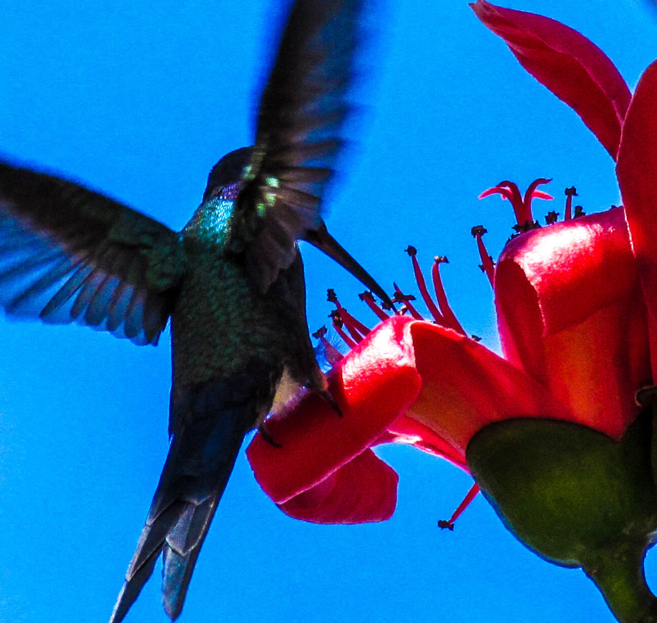 Animal Themes Animals In The Wild Beauty In Nature Bird Blooming Butterfly - Insect Close-up Day Flower Flower Head Fragility Freshness Hummingbird Insect Low Angle View Nature No People One Animal Outdoors Petal Plant Pollination Red Sky Spread Wings