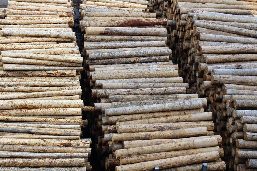 Abundance Backgrounds Brown Close-up Day Forestry Industry Large Group Of Objects Nature No People Outdoors Stack Of Tree Stack Of Trunks Timber Wood Wood - Material