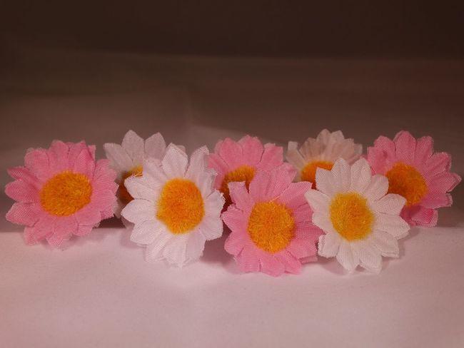 Decorative flowers. Flowers Flower Floral Pink Yellow Yellow Flower Pink Flower Colours Colourful White Background Decorative Flowers Decoration Little Flowers Close Up Close-up Closeup Pretty Beautiful Fake Studio Shot Lines Row White Flower Showcase April