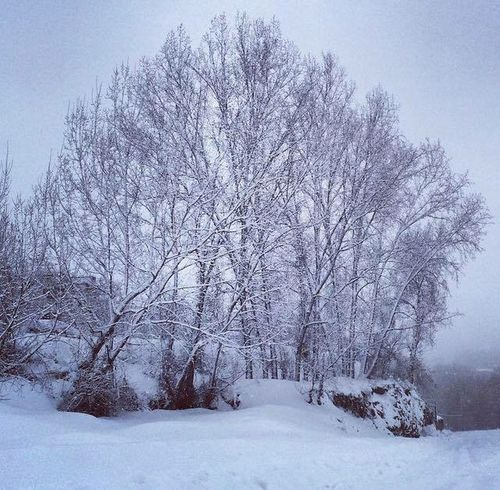 Snow covering the trees Taking Photos Hello World Check This Out Nature_perfection First Eyeem Photo Beautiful Nature Love Snow Nice Photo