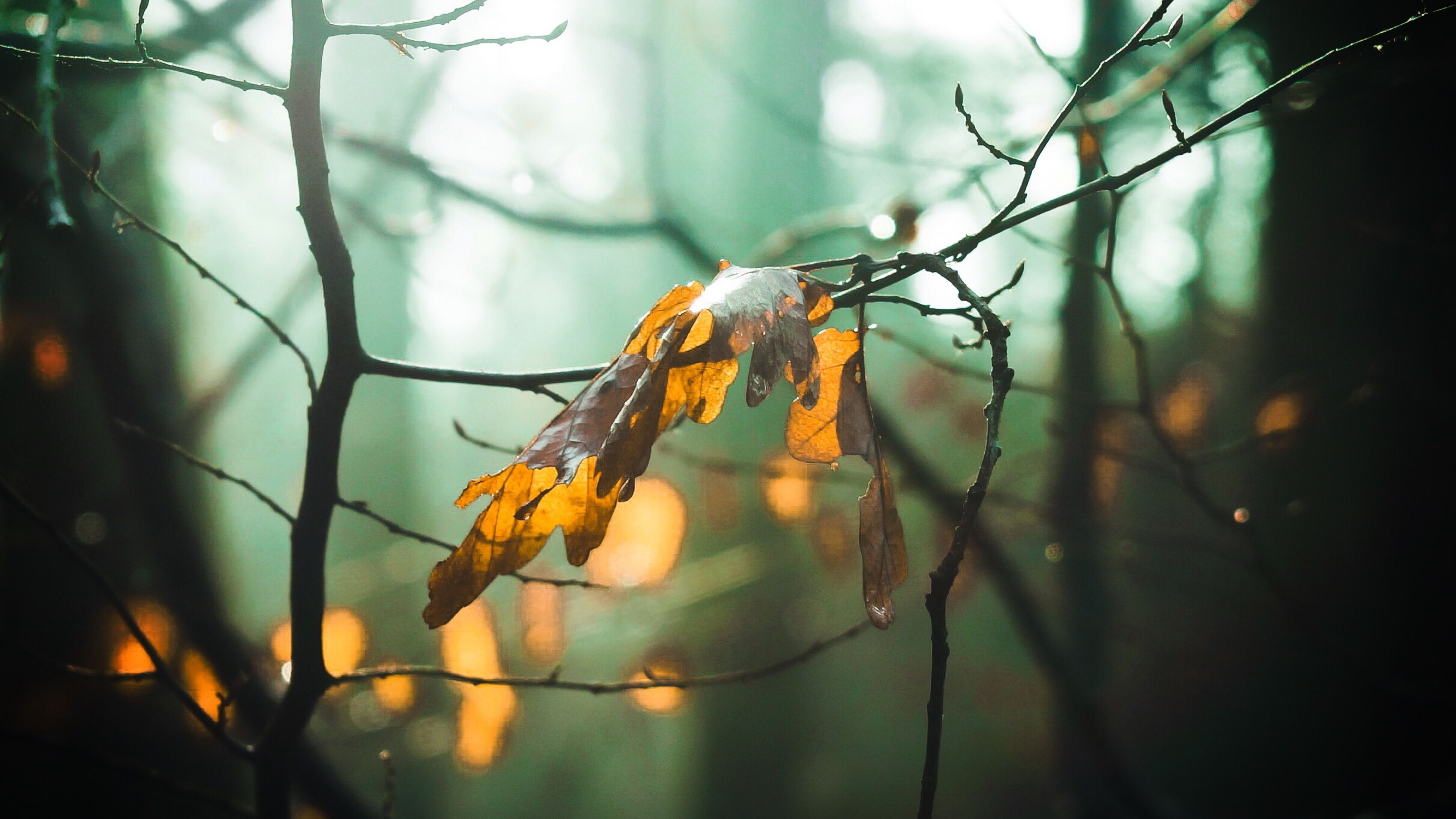 branch, focus on foreground, close-up, tree, twig, nature, forest, leaf, animal themes, one animal, plant, outdoors, selective focus, no people, animals in the wild, day, dry, perching, growth, sunlight