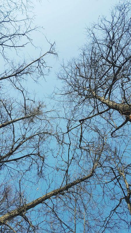 Lookup Lookuptothesky Blue Sky Trees And Sky Treetops Nakedtree