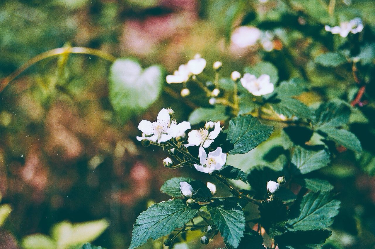 Beautiful stock photos of plant, Auto Post Production Filter, Close Up, Day, Defocused