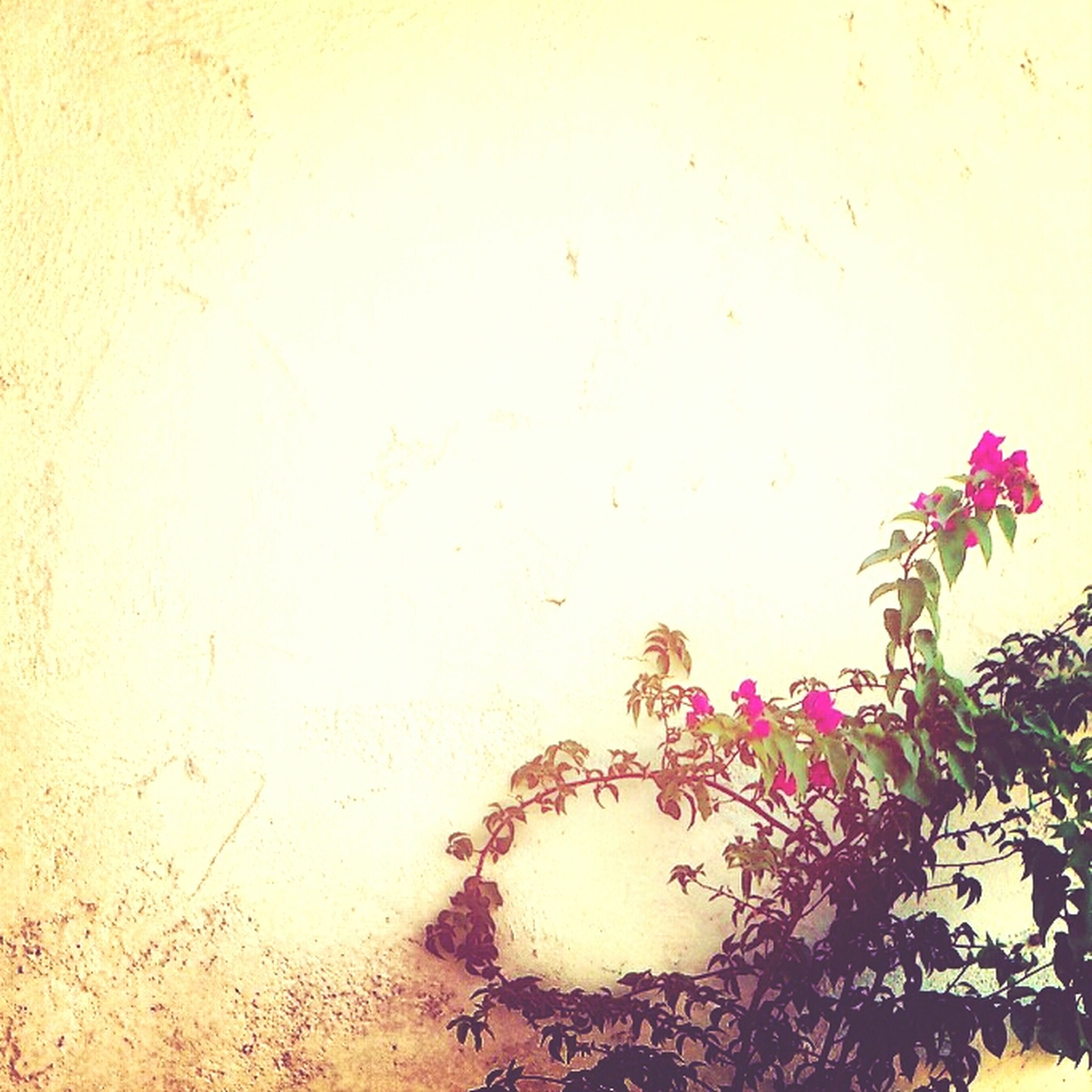 flower, growth, fragility, freshness, plant, nature, petal, close-up, beauty in nature, wall - building feature, stem, leaf, no people, pink color, day, copy space, outdoors, flower head, growing, blooming