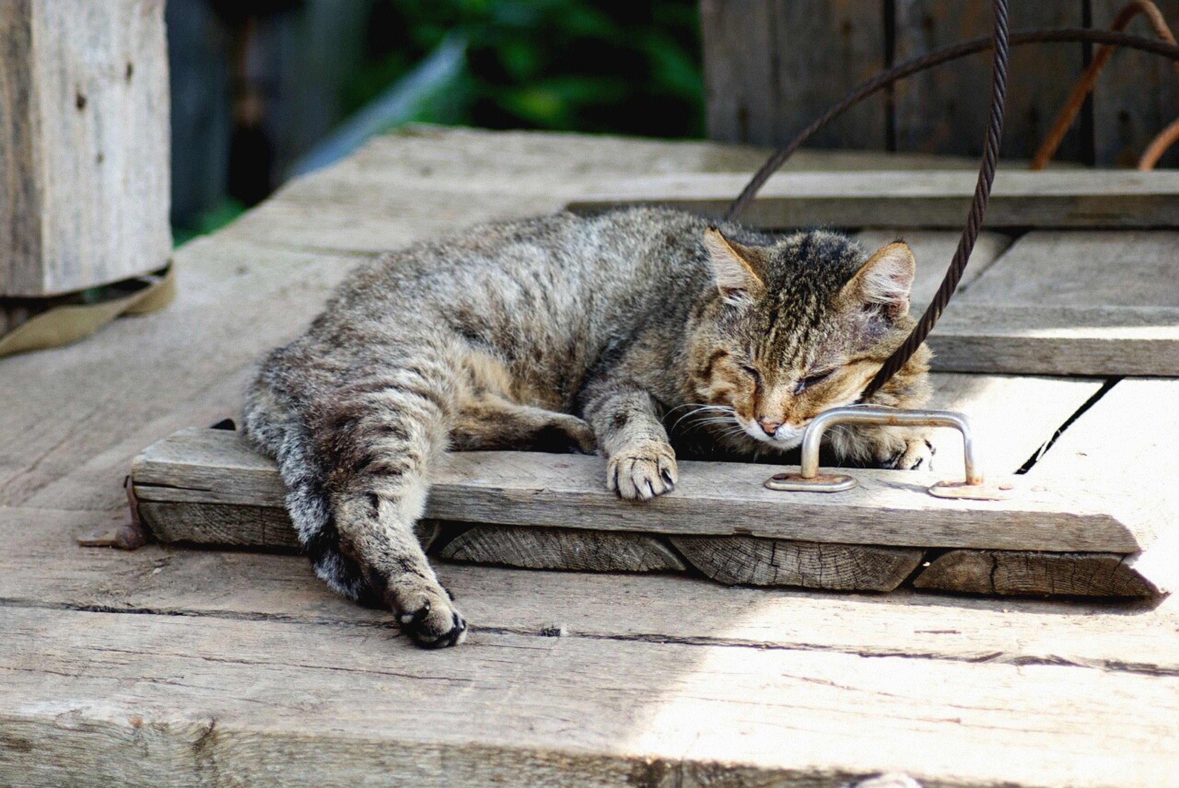 one animal, animal themes, mammal, domestic animals, pets, domestic cat, cat, feline, relaxation, sitting, full length, side view, lying down, steps, wood - material, outdoors, sunlight, day, wall - building feature, no people