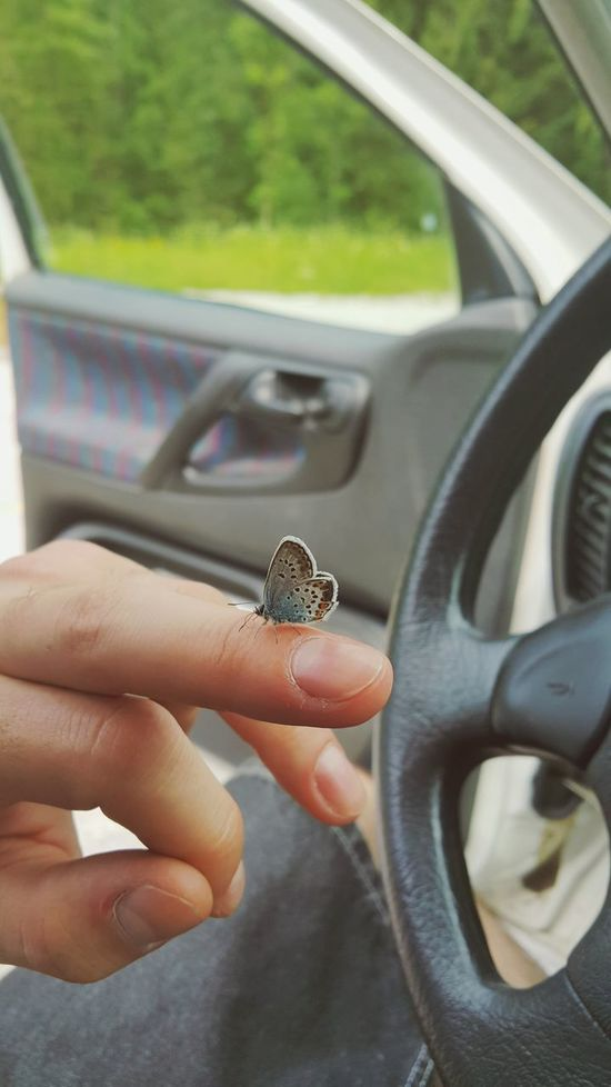 Butterfly Butterfly Butterfly On My Hand Animal Blue Wings NatureandPeople Finger Friendship Gozd Martuljek Car Focus On Foreground
