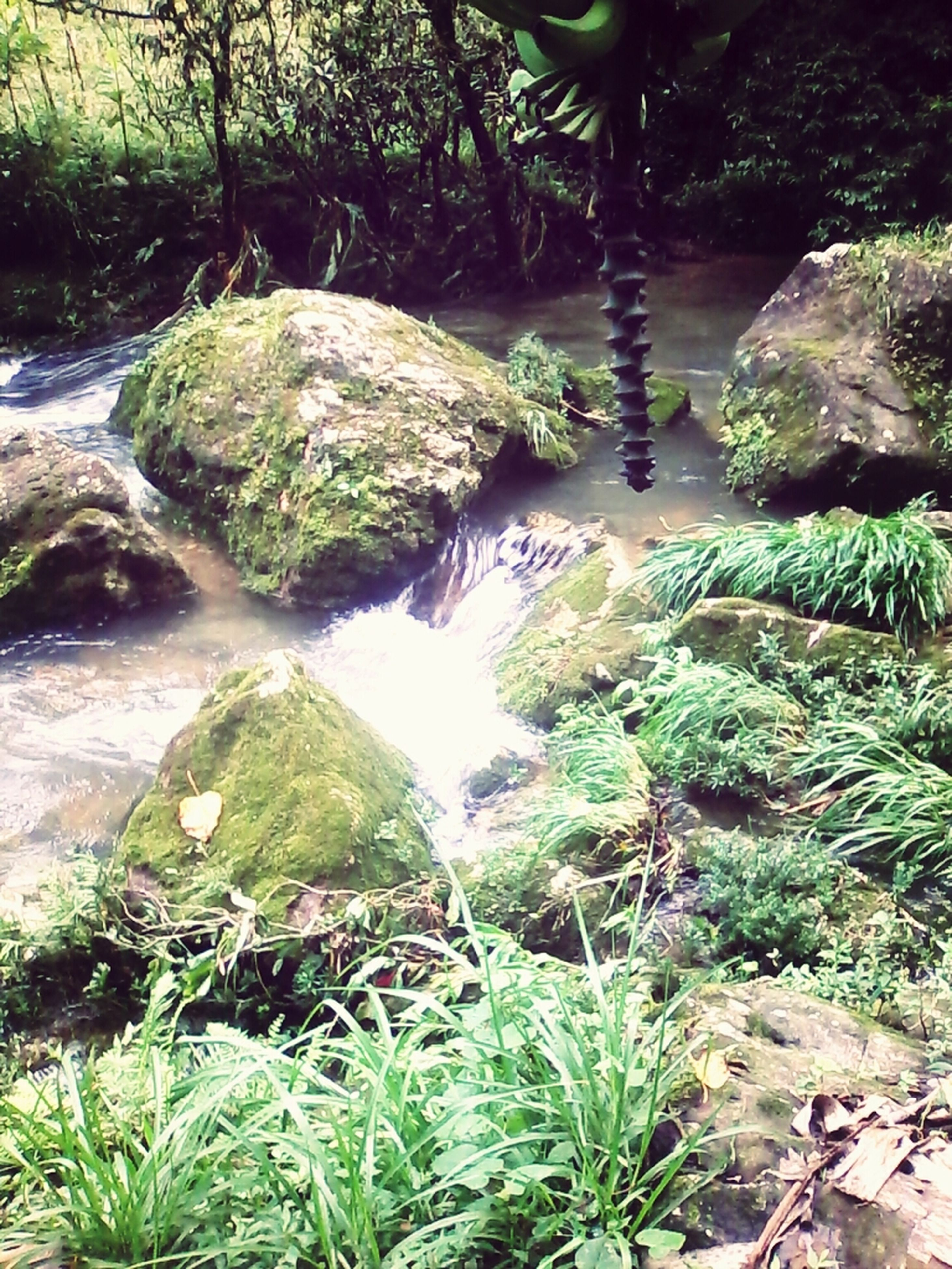 water, rock - object, tranquility, beauty in nature, nature, forest, tranquil scene, scenics, green color, stream, plant, growth, high angle view, tree, moss, flowing water, river, idyllic, day, non-urban scene