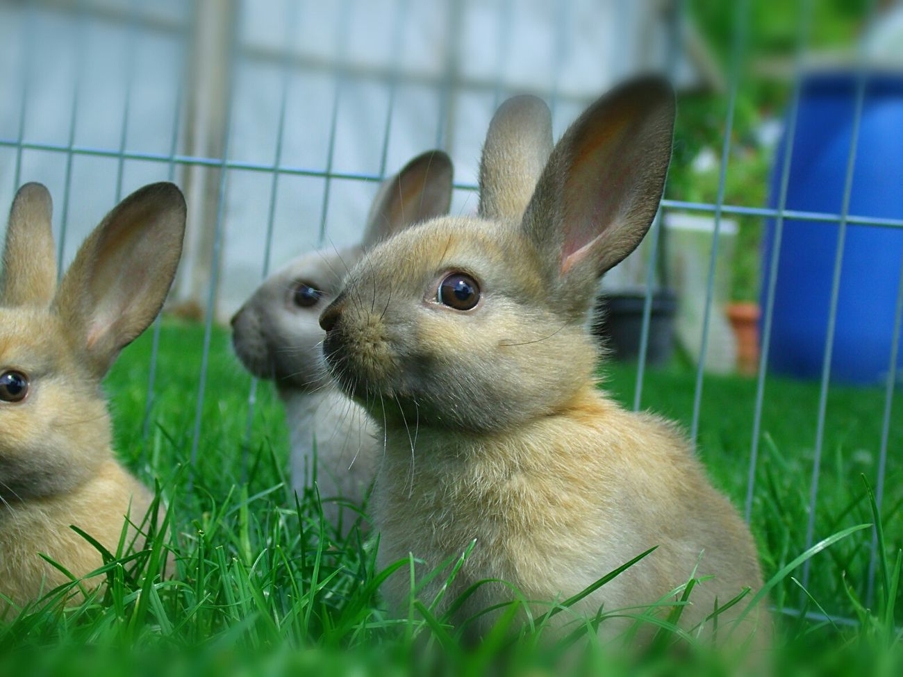 Cute Pets Rabbits First Eyeem Photo