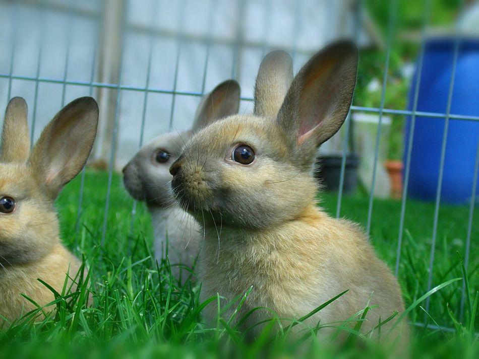 Cute Pets Rabbits First Eyeem Photo