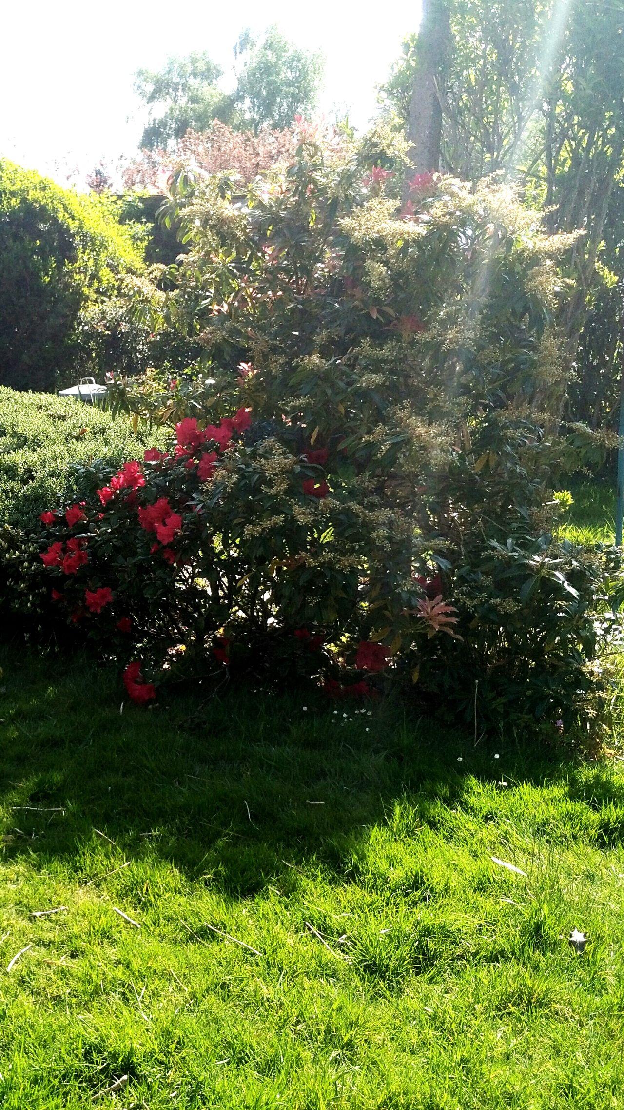 Sunrays On Plants Sunrays