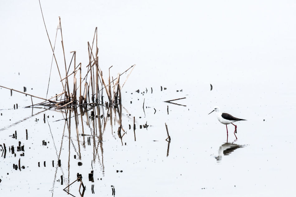 Animal Animal Themes Bird Day Lake Mirroring In Water Nature No People Outdoors Parque Nacional Parque National Coto Donana SPAIN Wildlife Wildlife & Nature
