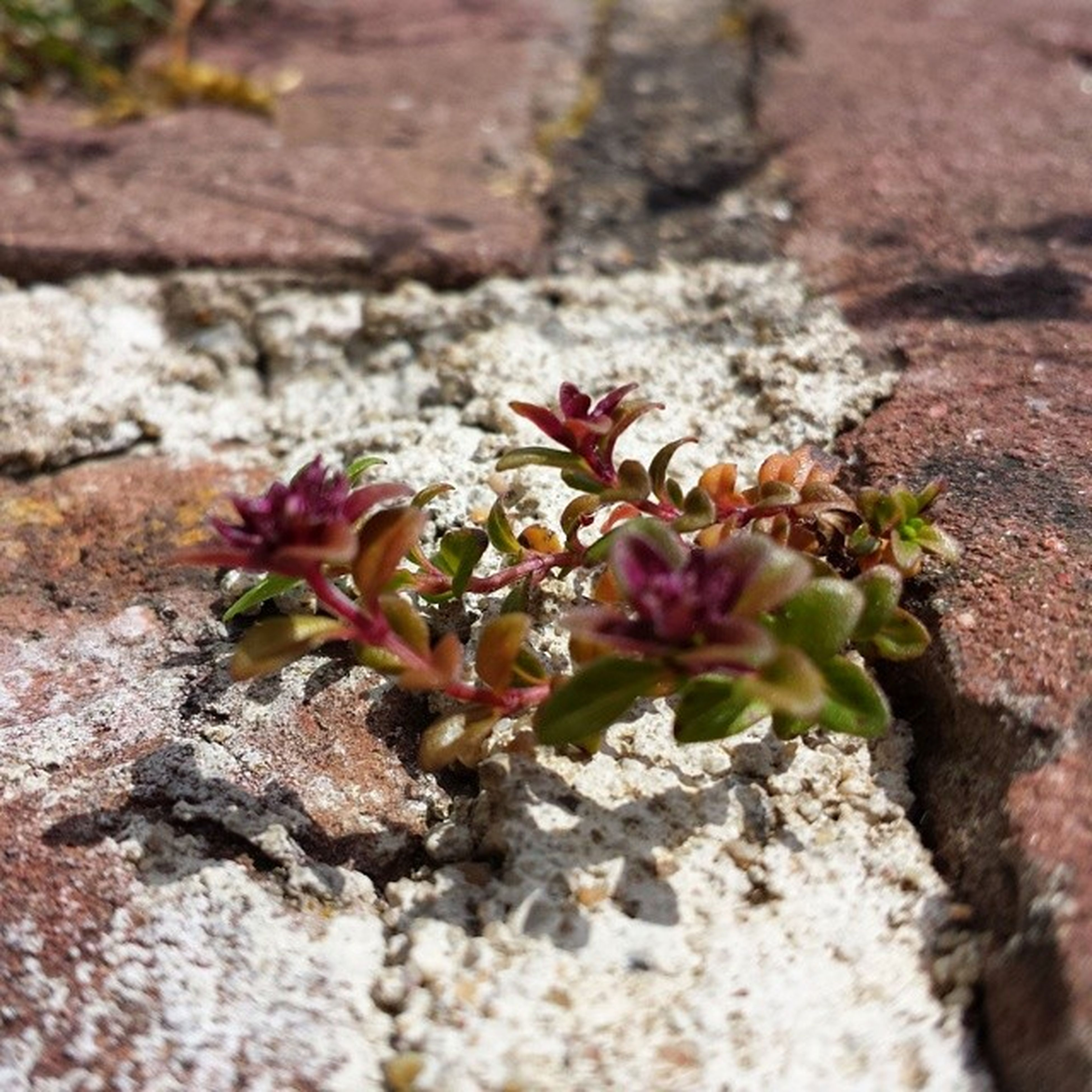 growth, plant, flower, rock - object, close-up, nature, selective focus, fragility, rock, growing, leaf, beauty in nature, textured, day, outdoors, high angle view, freshness, no people, focus on foreground, stone - object