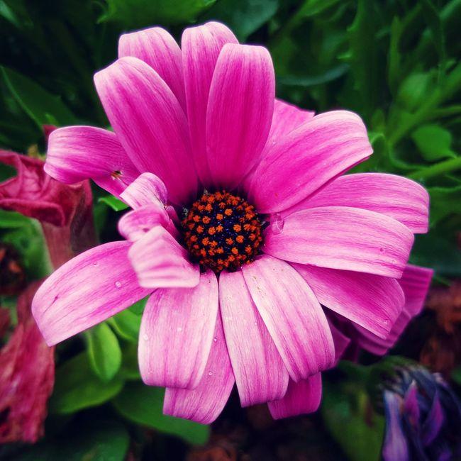 Flowers Streetphotography Colors Walking Around Denmark My Smartphone Life