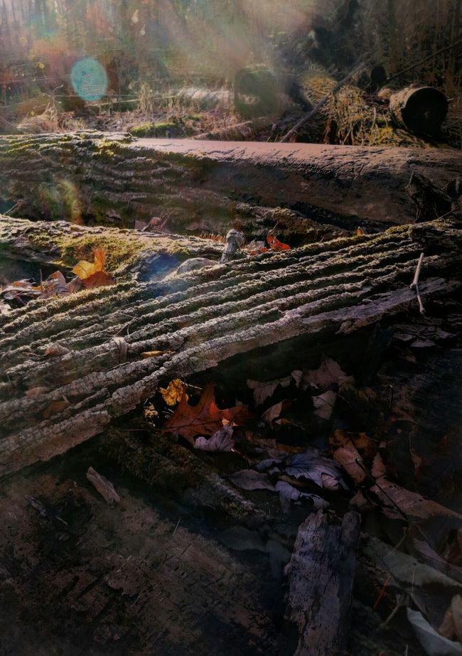 Natural bokeh and flare on fallen trees at Wolcott Mill EyeEm Best Shots - Nature Pure Michigan Creative Light And Shadow EyeEm Nature Lover Nature Photography Lensflares Forestwalk