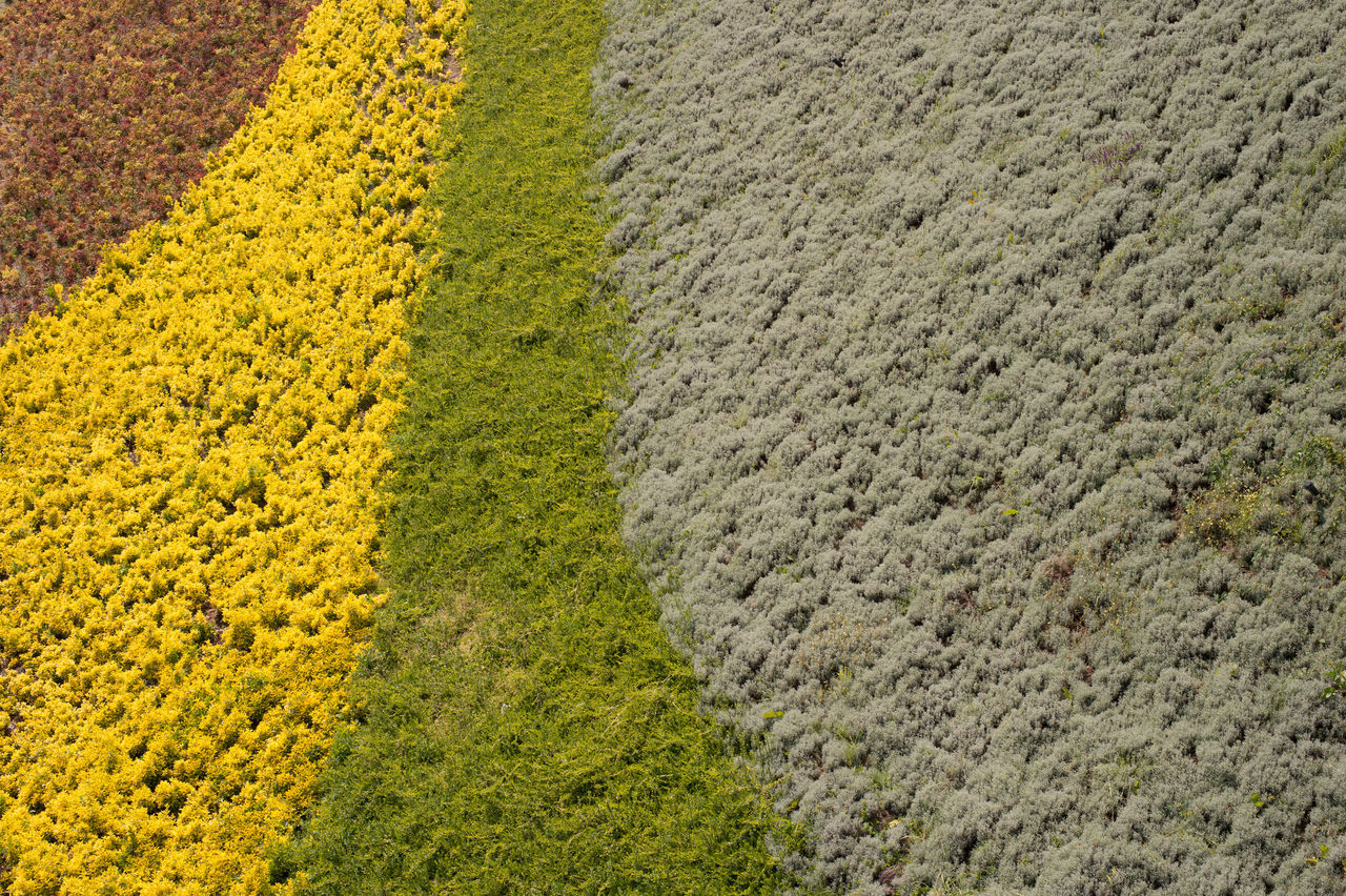 Patches of Multi-Colored Grass Agriculture Beauty In Nature Crop  Farm Field Freshness Full Frame Grass Growth High Angle View Landscape Nature Nature Nature Photography Nature_collection No People Outdoors Rural Scene Scenics Tranquility Yellow