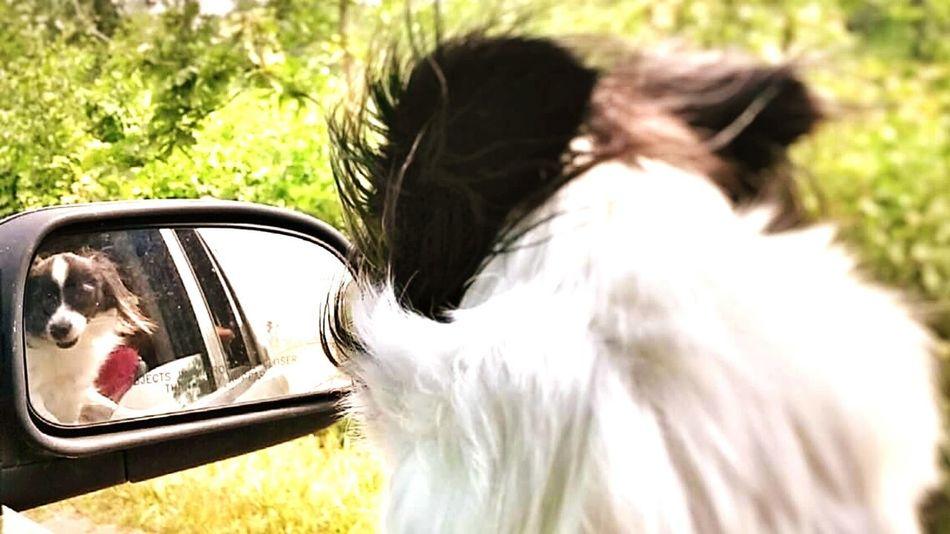Mydogsarecoolerthanyourkids My Dogs Beautiful Girl Lookatthatface Lookatme