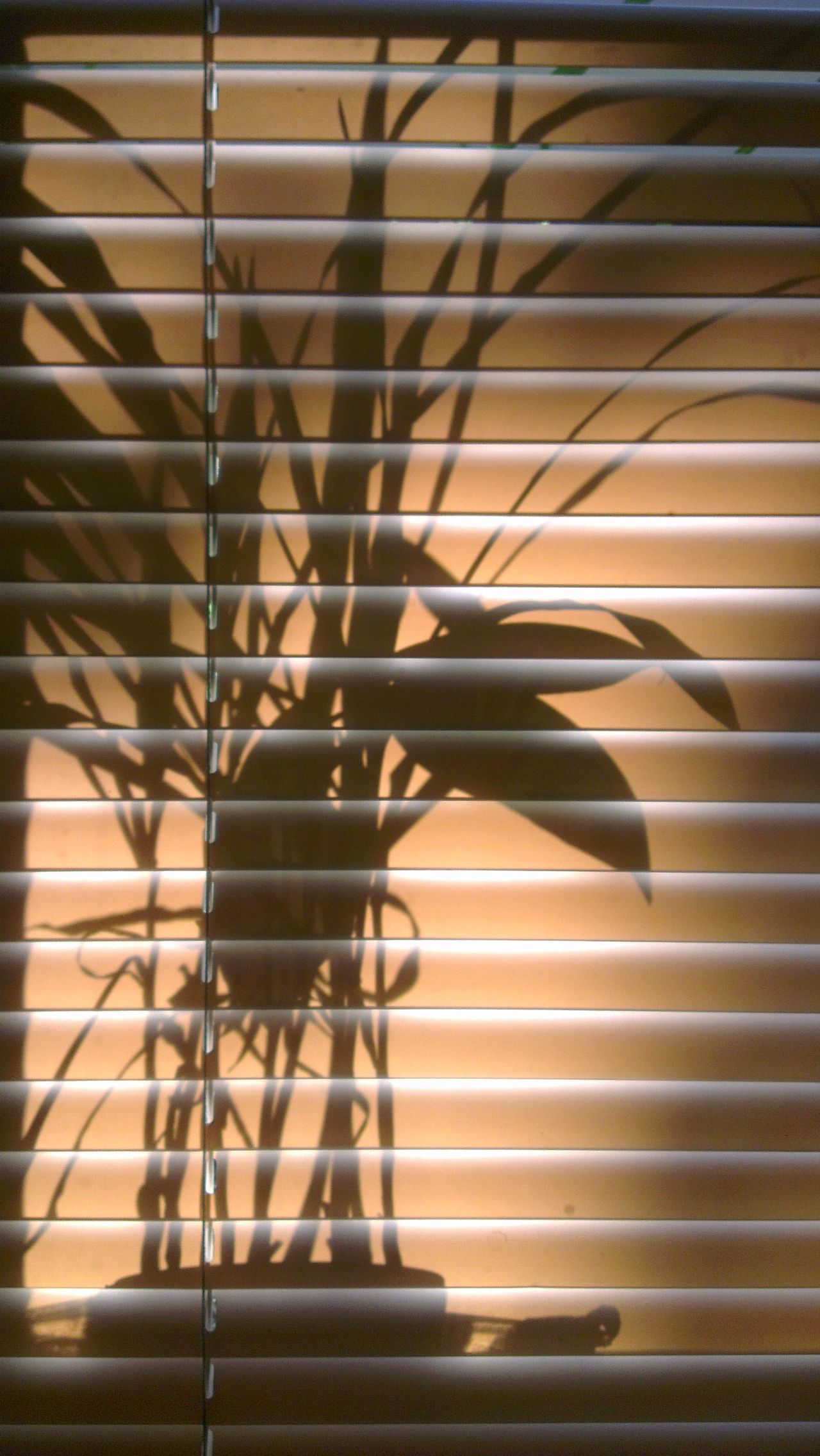 Silhouette Shadow Behind The Screen Plant Life Intheshadows Reflection