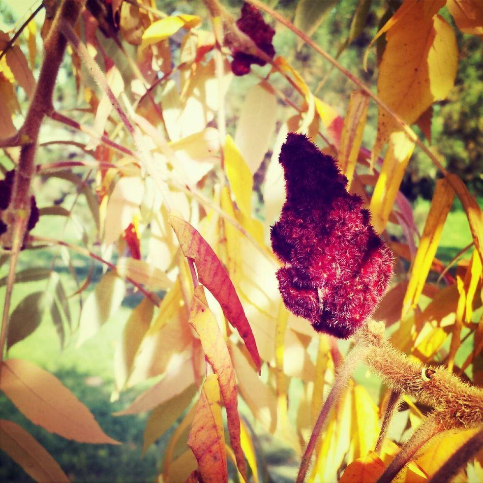 Nature Autumn Colors Leaves