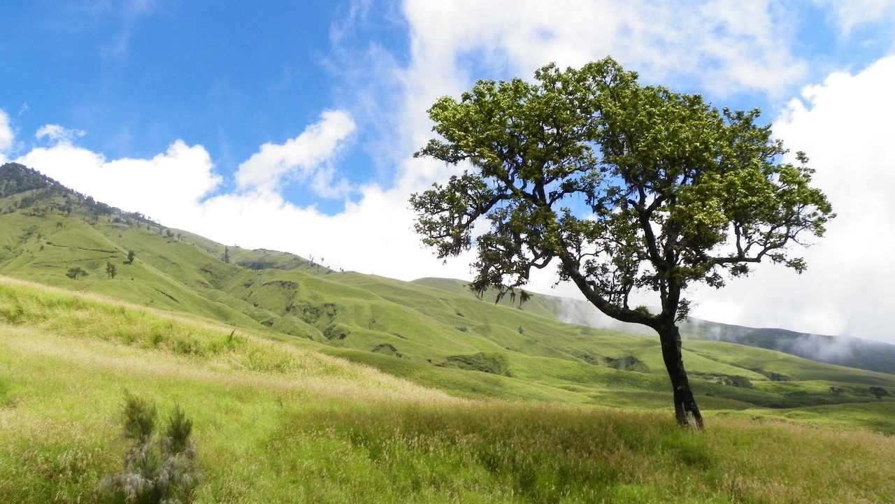 A tree in Lombok, Indonesia Beauty In Nature Cloud - Sky Day EyeEmNewHere Grass Grass Green Color Growth Idyllic Landscape Lombok Lush - Description Nature No People Outdoors Scenics Sky Tranquil Scene Tranquility Tree Wallace Line