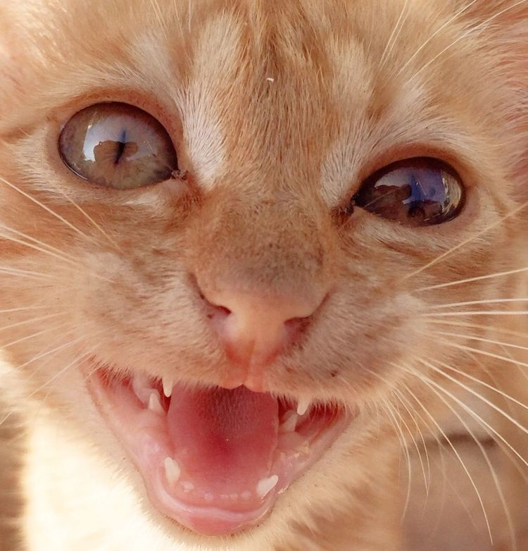 Smiling Catsmile Hello World Cheese! Cat Cats Catoftheday Cats Of EyeEm Kitty Summer2015