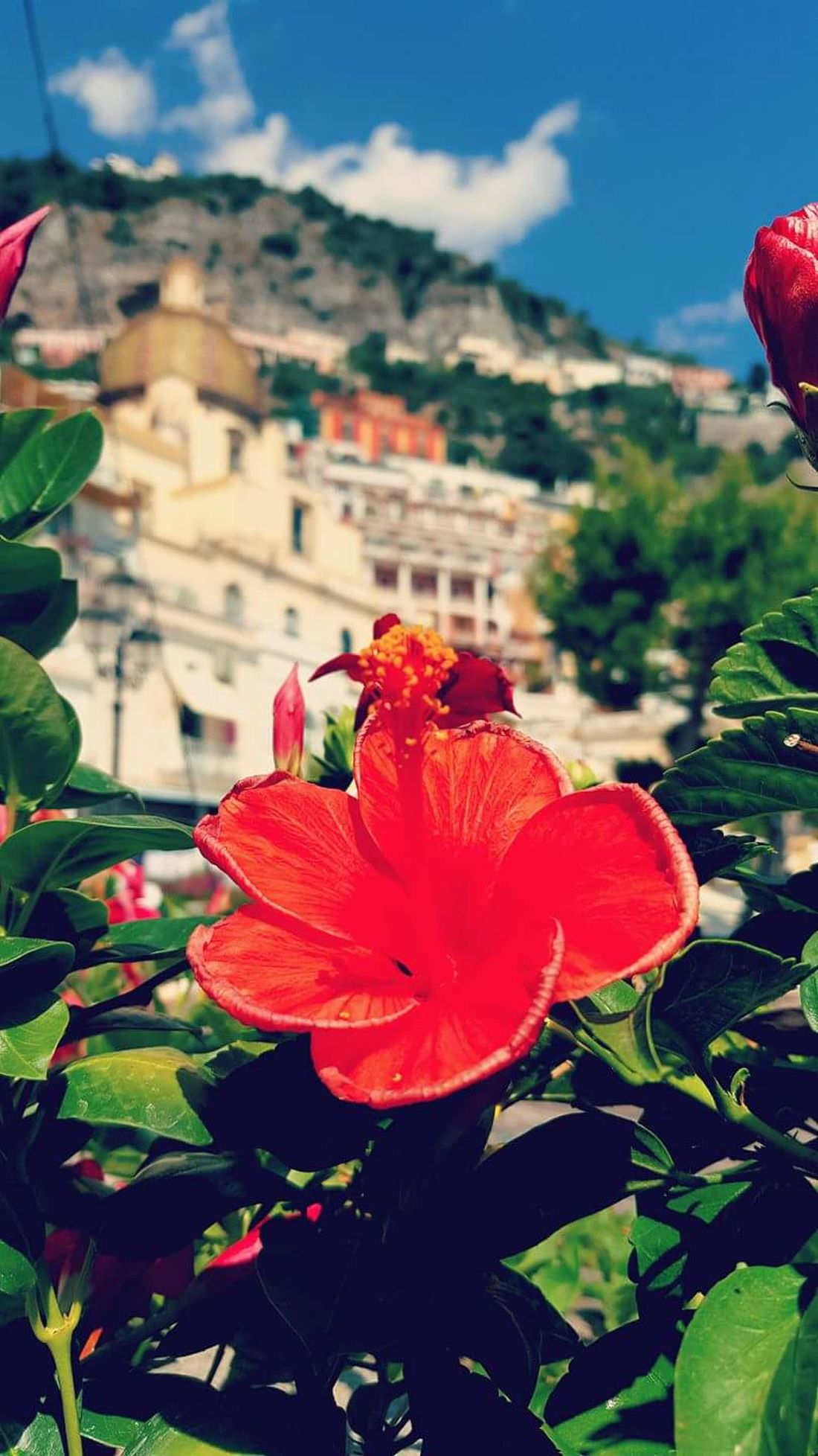 Positano Positano, Italy Positanocoast Positano Italy Positano Hidden Garden Amalfi_coast Amalfiküste Amalfitan Coast Amalficoast Amalfi Coast Costieramalfitana Costieraamalfitana Costiera Amalfitana Flower Fiori Flower Head Nature Plant Beauty In Nature Red Blossom Outdoors Close-up Fragility