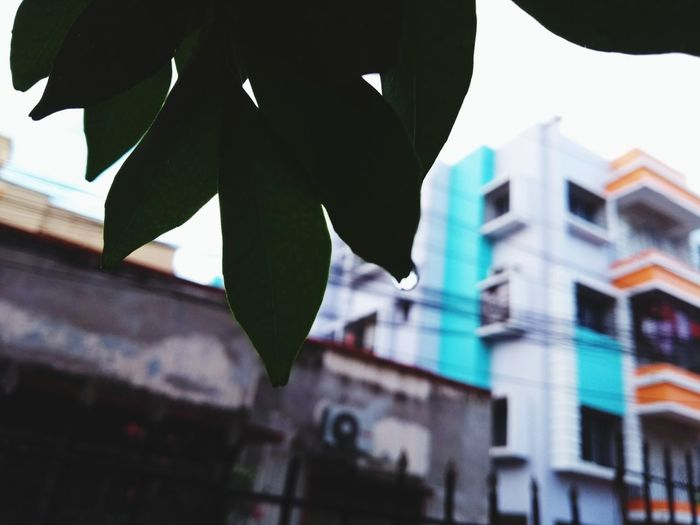 Building Exterior Outdoors Day Architecture Close-up City No People Leaf Built Structure Sky Sommergefühle