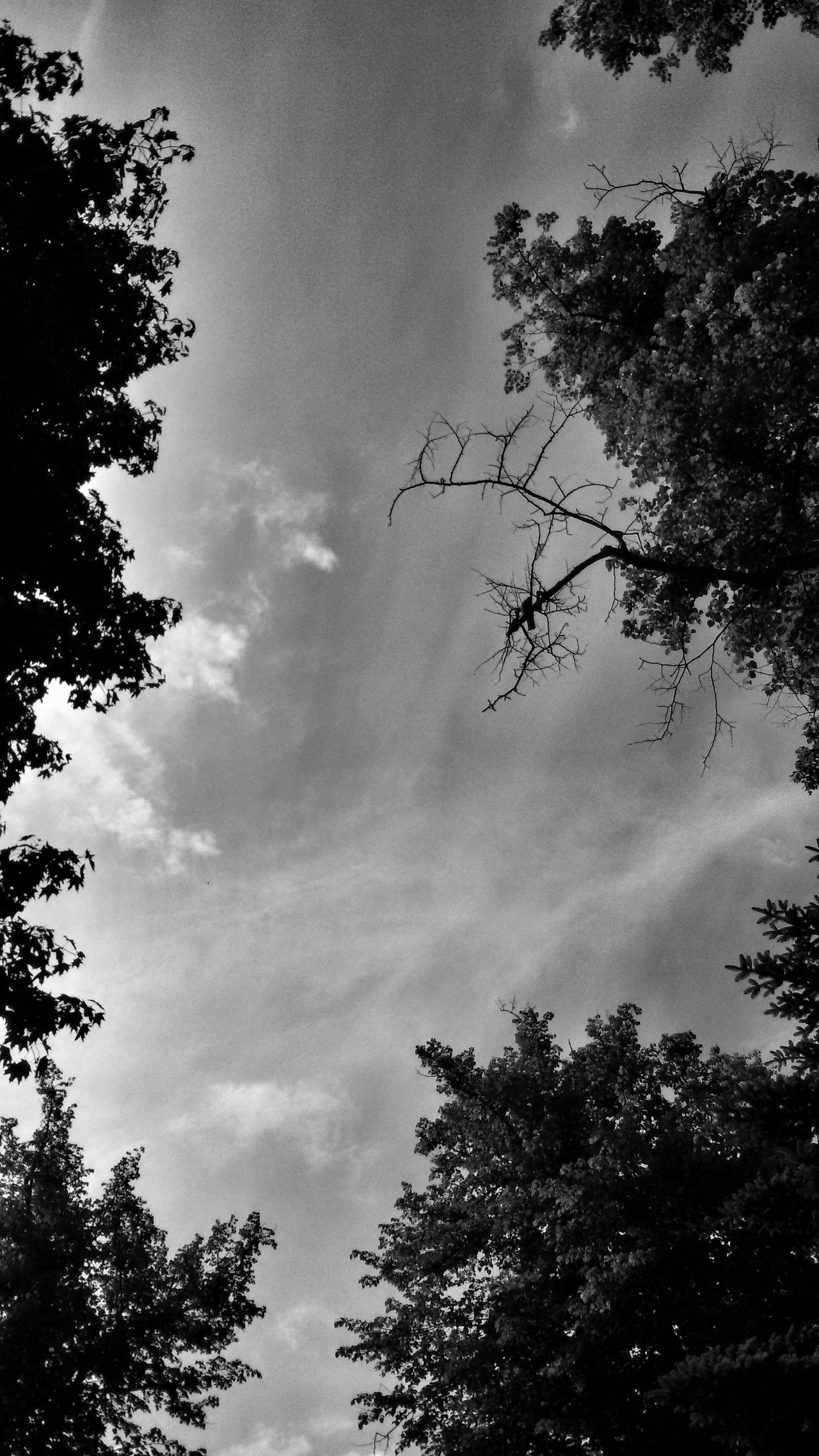 Tree Silhouette Sky View Beauty In Nature Nature Perspective Monochrome Black And White Photography
