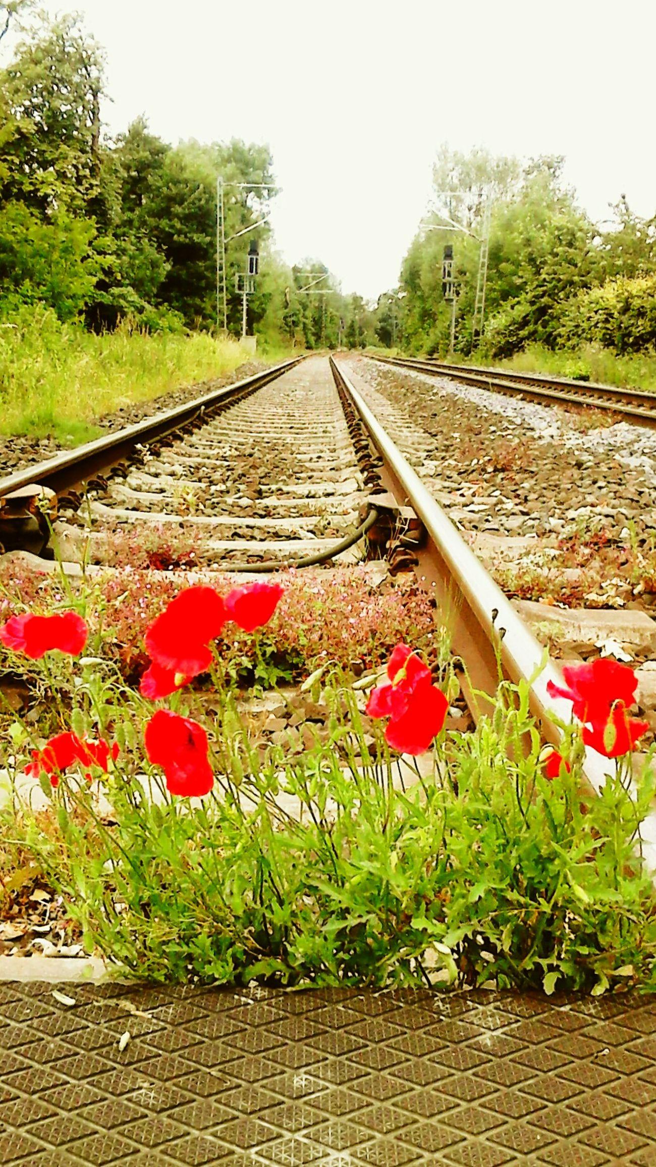 Mohnblumen am Bahnübergang . First Eyeem Photo Taking Photos Railway Deutsche Bahn