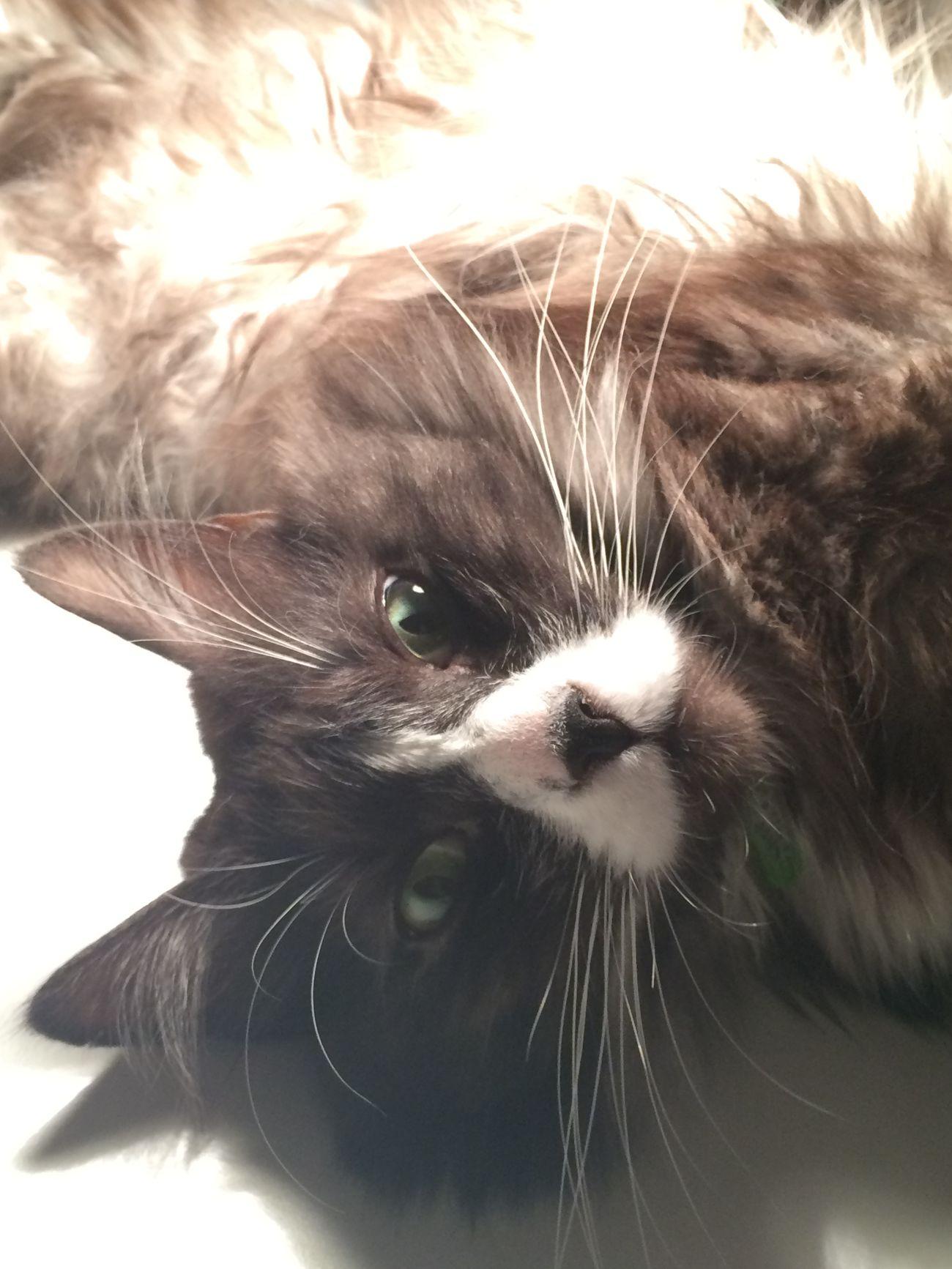 Relaxing cat selfi Vasiliy