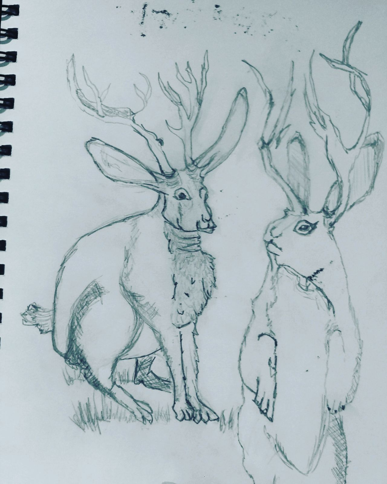 Sunday night sketches Sketchbook Pencil Jackalopes